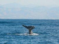 Vive la experiencia de las ballenas
