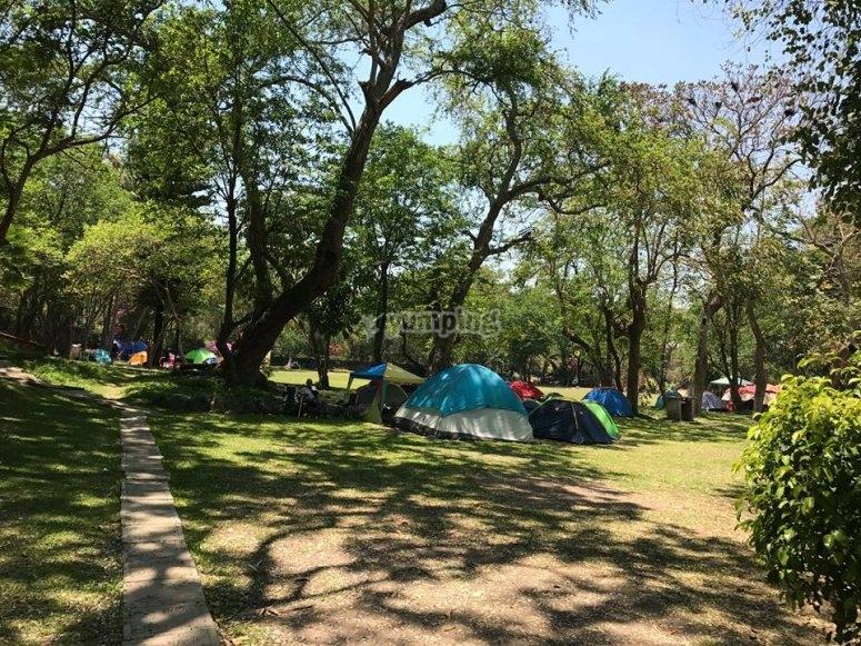Trae tu tienda para acampar