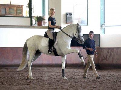 Horse ride training