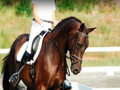 Horse training course riding school