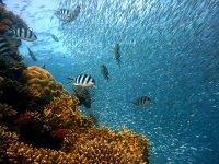 Marine species