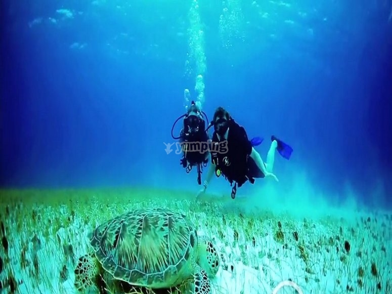 Con tortugas marinas