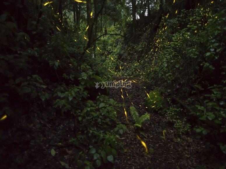 Meet the fireflies