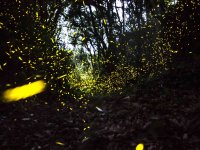 Firefly tour plus 1 night lodging on a cabin