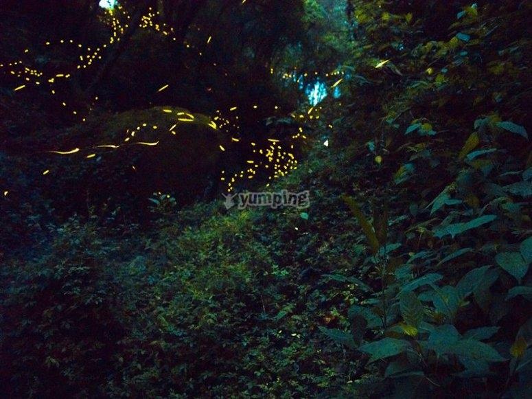 Sendas iluminadas