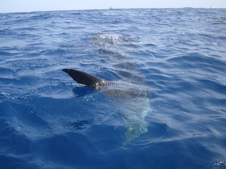Observando al tiburón
