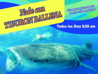 Whale shark swimming, 6 hours. Cancún.
