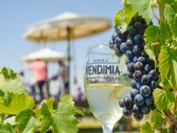Vineyard area