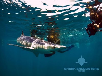 Shark Encounters Open Ocean Safari
