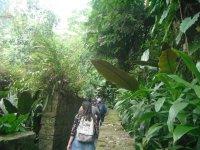caminata entre selva
