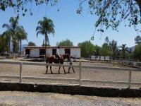 Horse ride for beginners, Querétaro