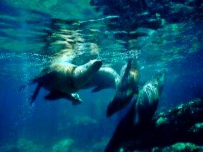Tour en la Isla Espíritu Santo, snorkel, 7 horas