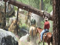 Horseback riding in group
