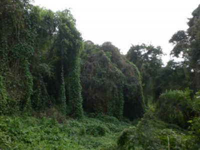 Selva Esmeralda