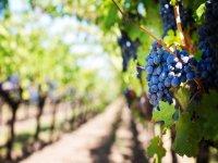 Meet the wine