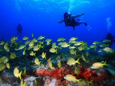 A' HA' Scuba Diving
