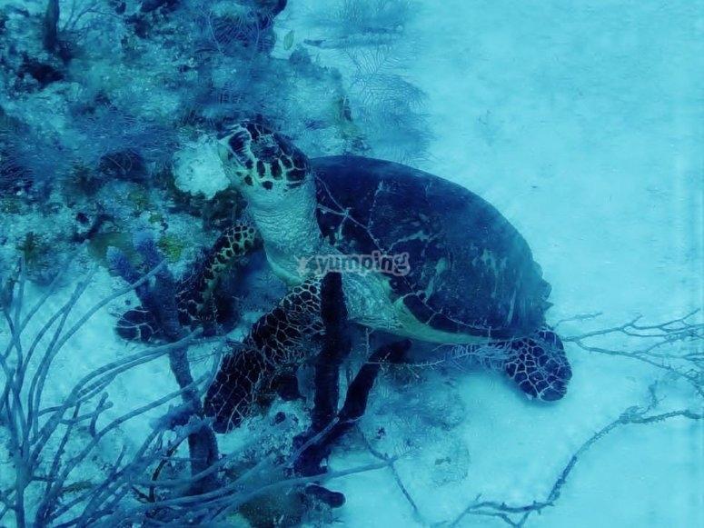 Descubre la belleza marina