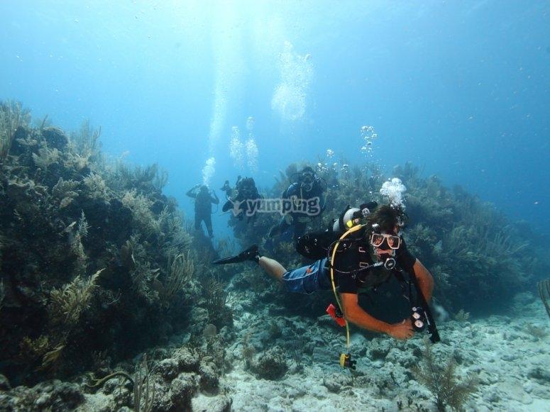 bucea entre los fondos marinos