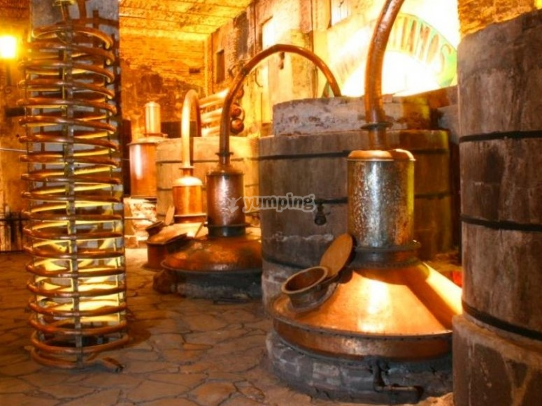Conocerás sobre el proceso de producción del tequila