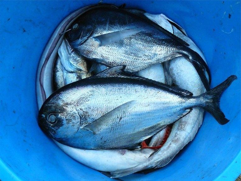 grandes peces