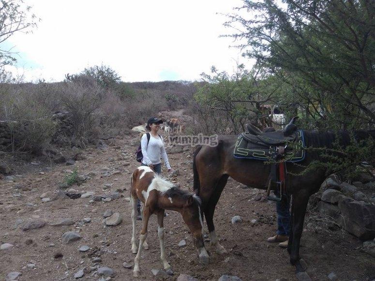 Riding the animals