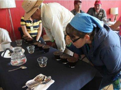 Tour experiencias de café desde Guayabitos, adulto
