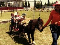 Farm party for kids, 3 hours