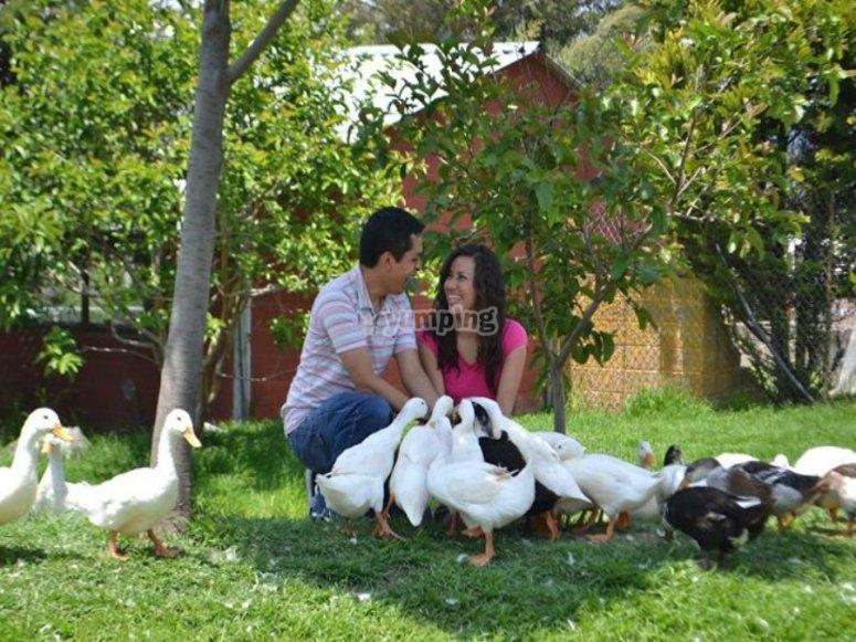 con el pato