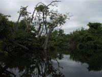 manglares naturales