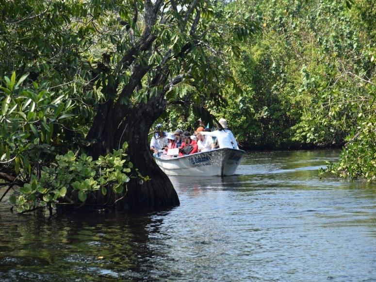 paseo por los manglares