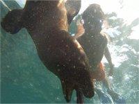 expedicion  baja con lobos marinos