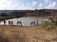 Horseback Riding with Swimming in Lake Tecozautla 1 Night