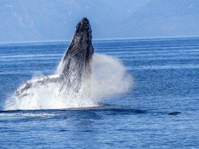 Avistamiento ballenas+snorkel Isla del Coral Tepic