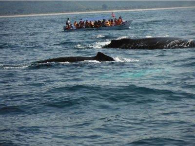 Vistas Ballena+snorkel Isla Coral Guayabitos niños
