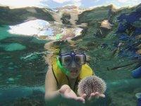 Finding sea urchin