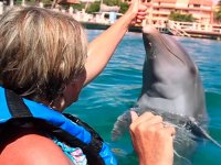 Swimming with dolphins + accommodation