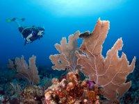 bucea con los corales.