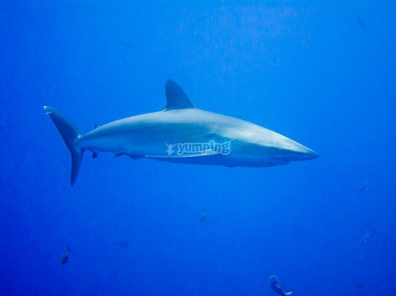 A shark in Veracruz