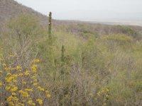 Cactus y vegetacion