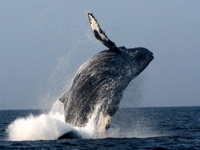 Mi Chaparrita Whale Watching