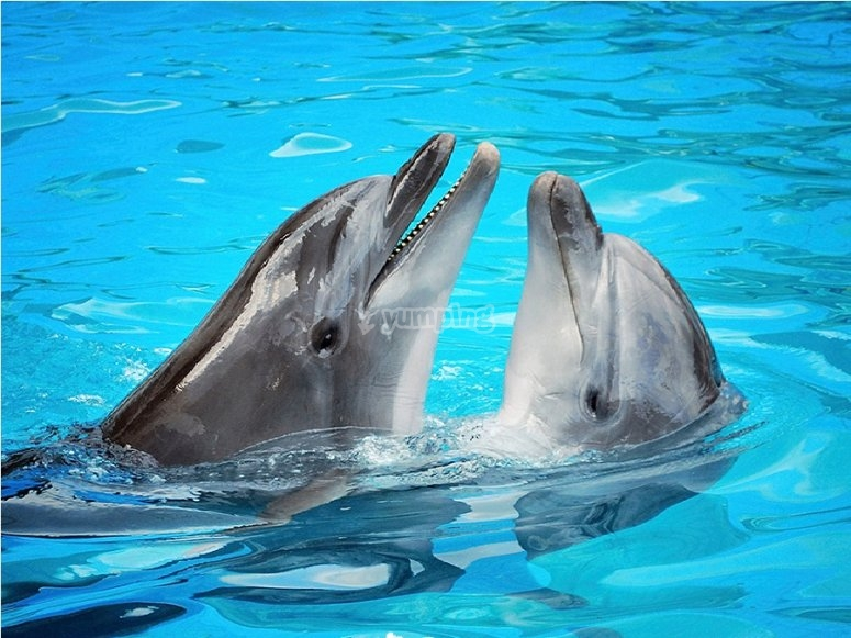 Greeting our dolphins