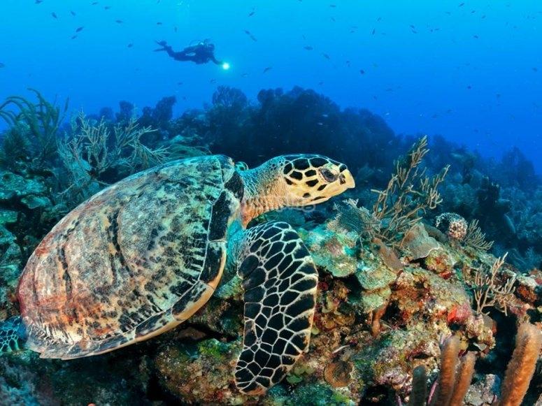 conoce las tortugas