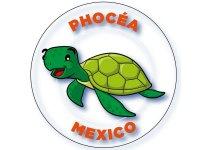 Phocéa México La Paz Buceo