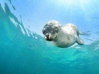 Lobos marinos en la Isla Espíritu Santo