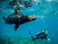 Haciendo nuevos amigos debajo del mar