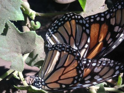 Visiting a butterfly sanctuary in Valle del Bravo