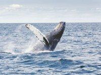 Ballena jorobada feliz en las aguas cálidas de Cabos San Lucas