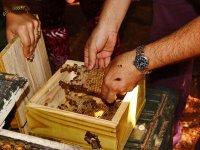 Producción de miel melipona de las abejas mayas