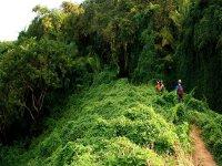Caminata guiada al Cerro del Mono, Punta de Mita