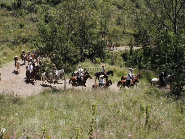 Routes with surviving horses